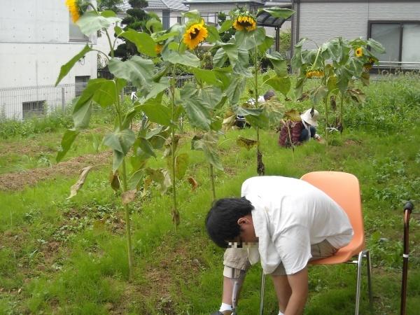 調理実習・農作業 9月_a0115956_14391296.jpg