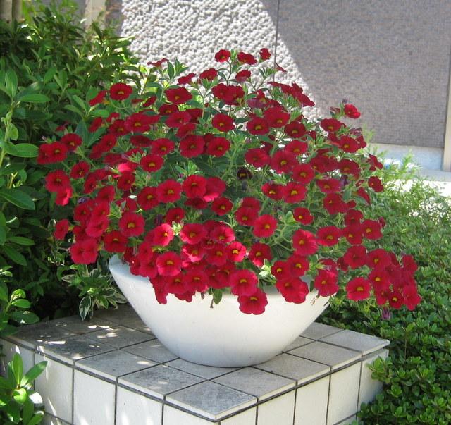 夏の花から秋の花へ_c0248269_16071081.jpg