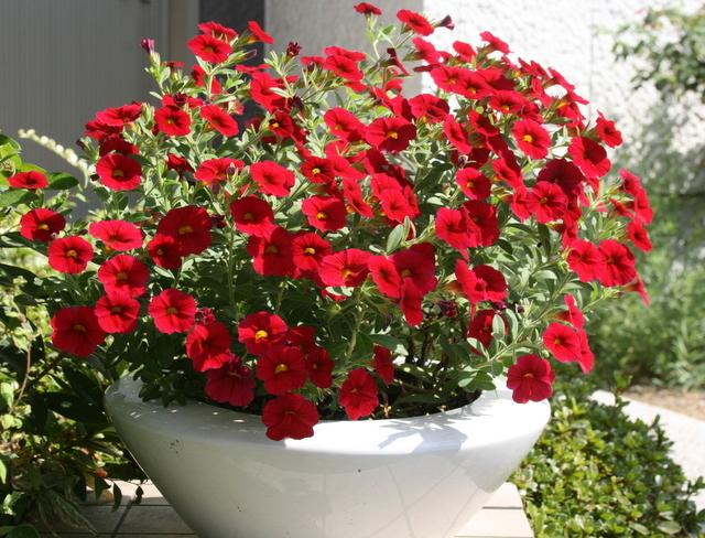 夏の花から秋の花へ_c0248269_16075791.jpg