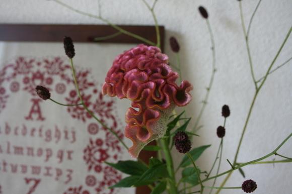 夏の花から秋の花へ_c0248269_16114363.jpg