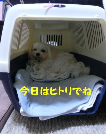b0193480_15381629.jpg