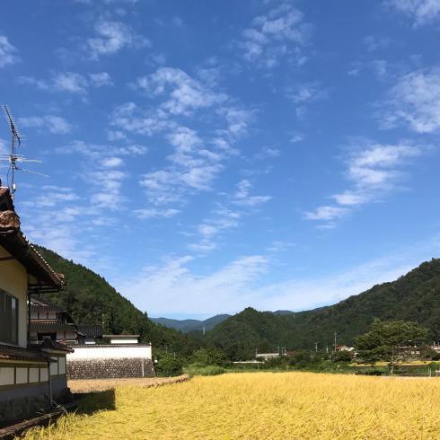 稲刈り...今年はできが良い_f0099102_14391142.jpg