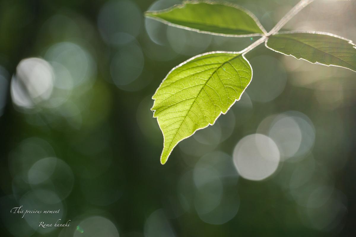 梅雨の季節の美しさ_c0137403_14032062.jpg