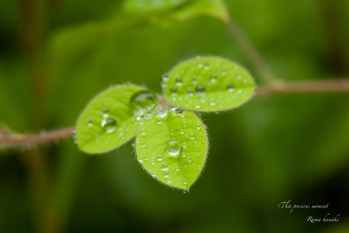 梅雨の季節の美しさ_c0137403_14032094.jpg