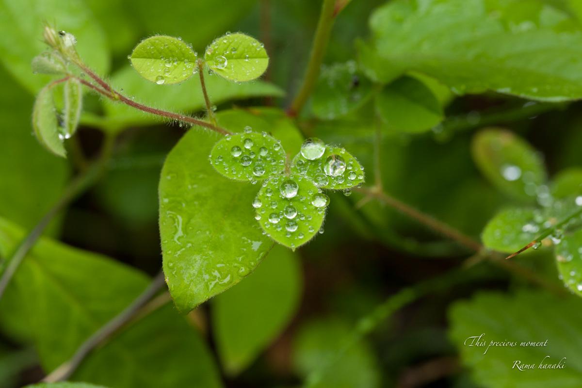 梅雨の季節の美しさ_c0137403_14032198.jpg
