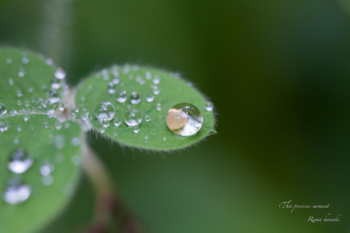 梅雨の季節の美しさ_c0137403_14033352.jpg