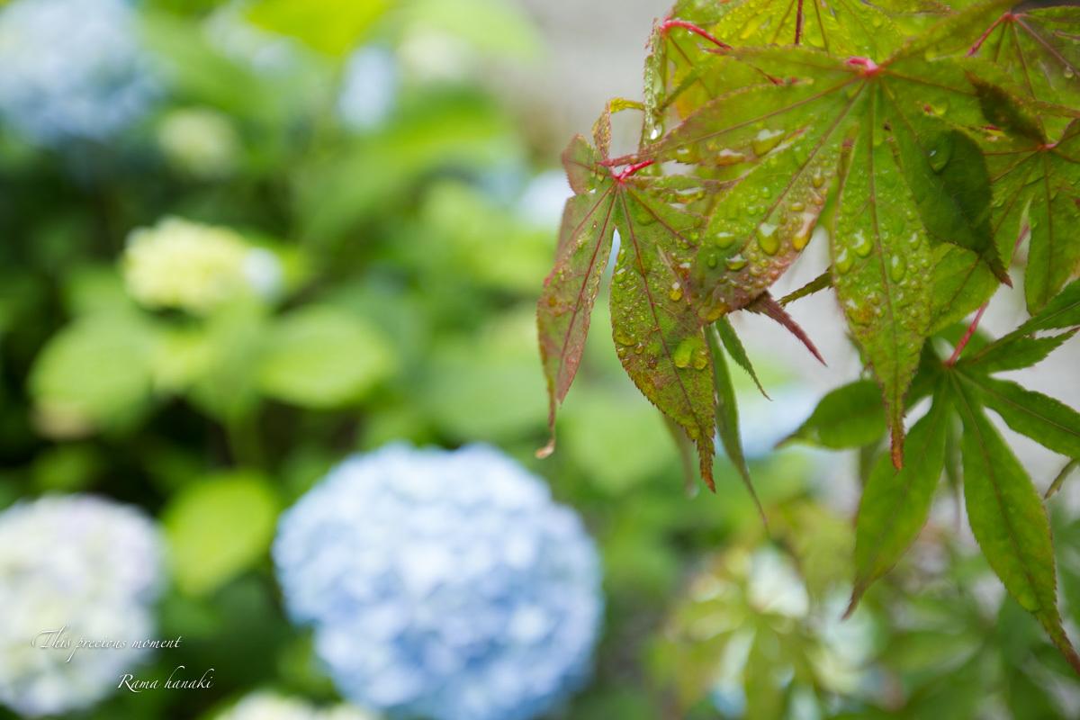 梅雨の季節の美しさ_c0137403_14034271.jpg
