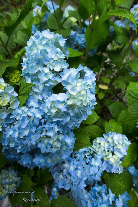 梅雨の季節の美しさ_c0137403_14235192.jpg