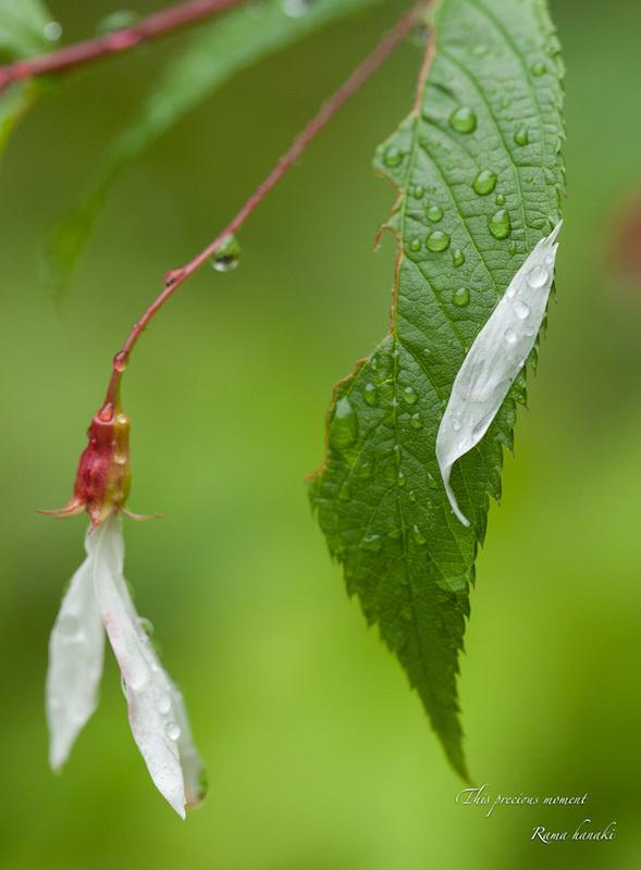 梅雨の季節の美しさ_c0137403_14261590.jpg
