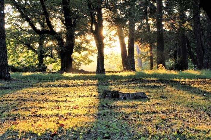 初秋の朝に_d0150720_06395271.jpg