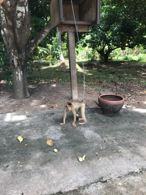 タイ サムイ島 のココナツオイル工場へ_c0141025_12090775.png