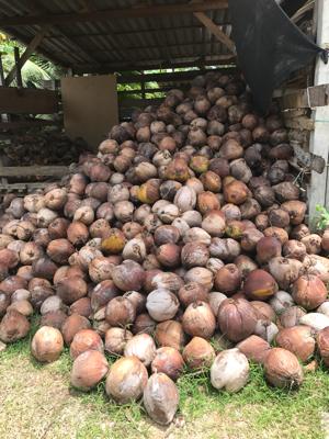 タイ サムイ島 のココナツオイル工場へ_c0141025_12093403.png