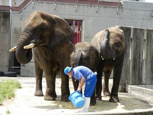 とべ動物園のゾウさん豆知識_e0272869_10432774.jpg