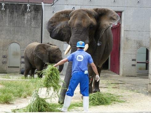 とべ動物園のゾウさん豆知識_e0272869_11020358.jpg