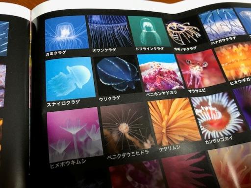 福岡の海は美しい(福岡の海中世界展)_b0214473_8455863.jpg