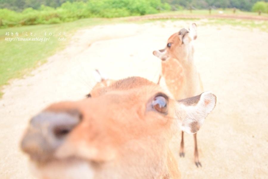 Deer_d0342382_23491749.jpg