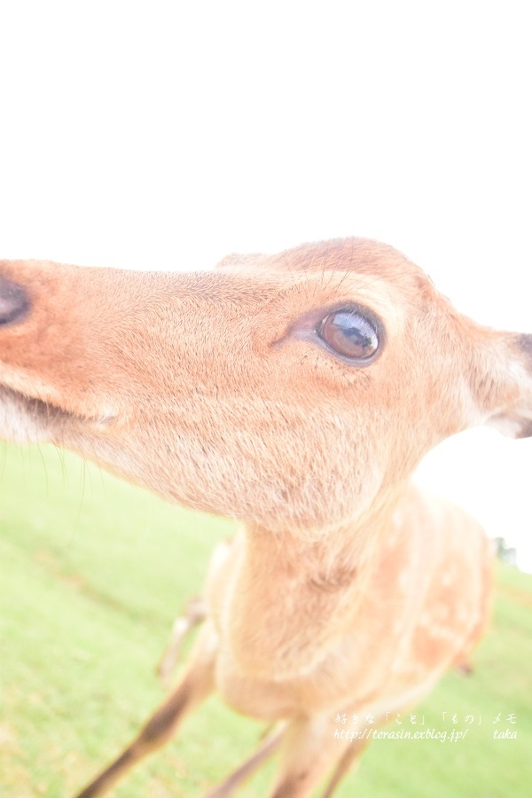 Deer_d0342382_23492796.jpg