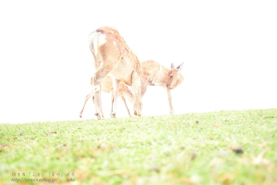Deer_d0342382_23495021.jpg