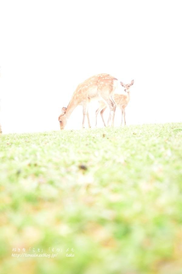 Deer_d0342382_23501624.jpg