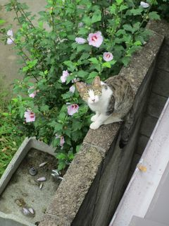 練馬区の錦で、猫監督_c0223192_22173691.jpg