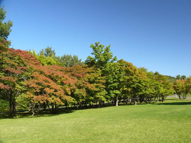真駒内公園_d0162994_08522381.jpg