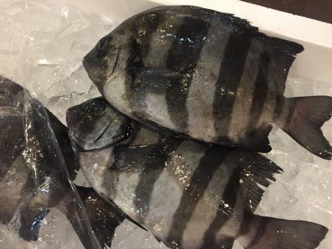 鳥取港海鮮産物市場かろいち  若林商店 ご馳走空間_e0115904_22164387.jpg