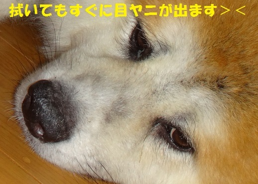 f0121712_08490409.jpg