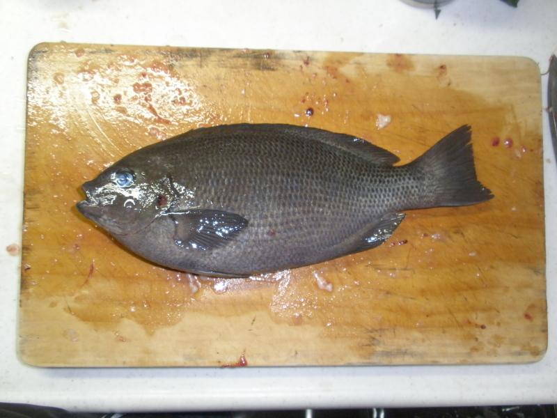 海上釣堀うみんぐ大島~魚はルアーで釣ってこそ!そんなふうに考えている時期が僕にもありました_a0376159_22033804.jpg