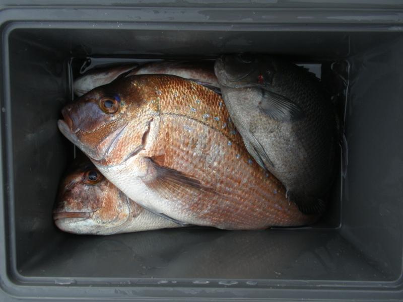 海上釣堀うみんぐ大島~魚はルアーで釣ってこそ!そんなふうに考えている時期が僕にもありました_a0376159_22043622.jpg