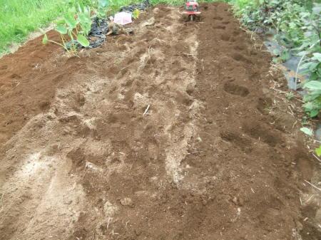 白菜の植え付け_b0137932_17531445.jpg