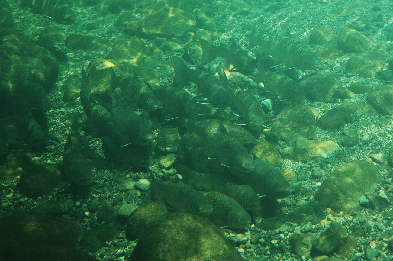 奥只見の魚を育てる会_e0150433_17221675.jpg