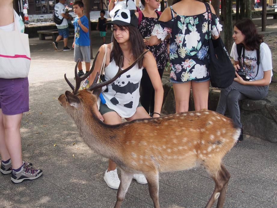2つも世界遺産がある広島県には欧米客が多く、インド人ツアーもいた_b0235153_15542176.jpg