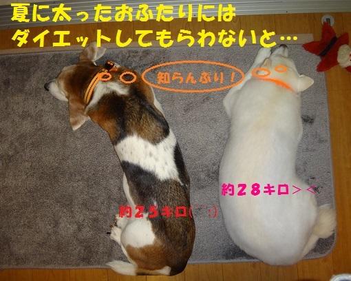 f0121712_22232257.jpg