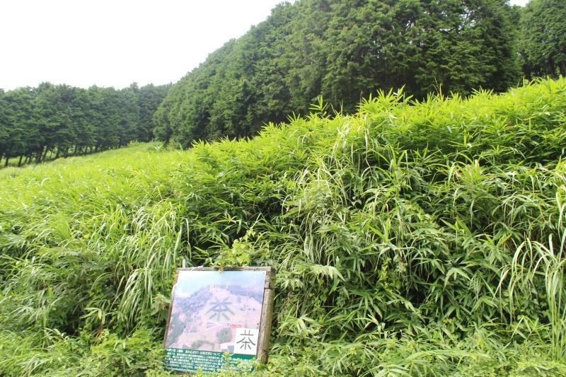 粟ヶ岳から_b0220318_08522093.jpg