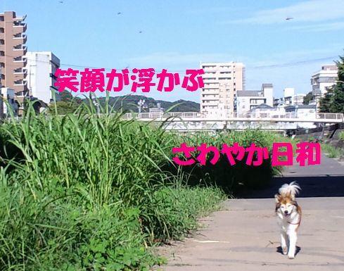 c0025171_13074530.jpg