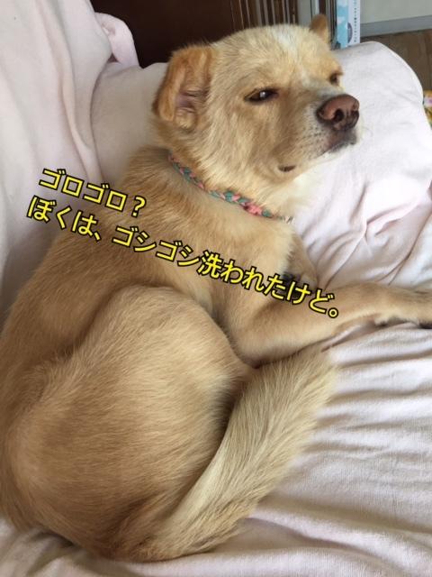 d0046821_16374522.jpg