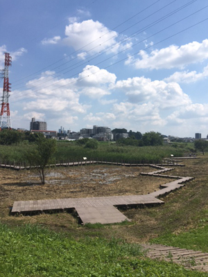 三橋総合公園_b0262124_20244543.jpg