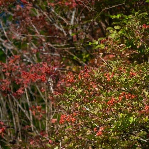 秋が来た...01_f0099102_16061607.jpg