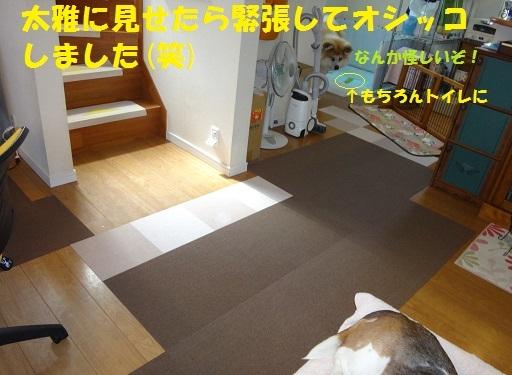 f0121712_23543232.jpg