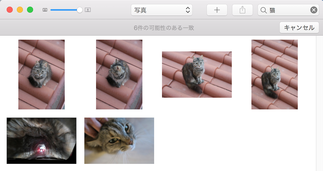 アルプス岩のトンネルと猫の妖しい関係、きてれつマックブック_f0234936_5554494.png