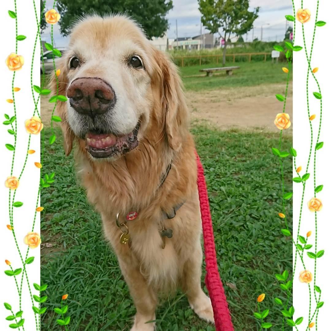 9月11日(月)…犬の保育園&はじめてのロースィーツレッスン_d0256356_07180113.jpg