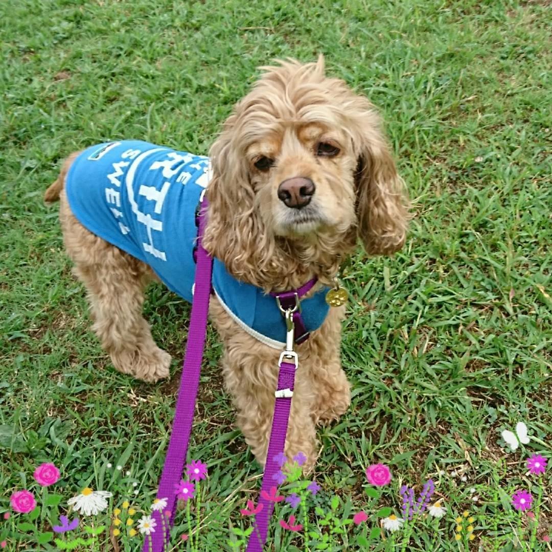 9月11日(月)…犬の保育園&はじめてのロースィーツレッスン_d0256356_07180278.jpg