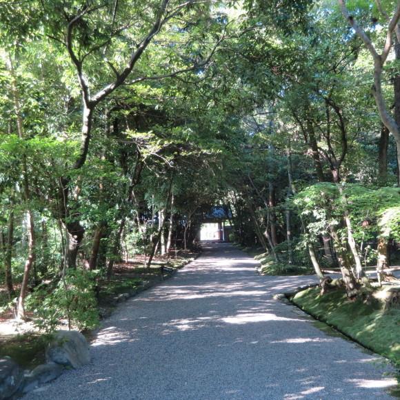 秋篠から歌姫の三角へ_c0001670_19405054.jpg