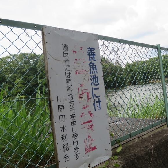 秋篠から歌姫の三角へ_c0001670_19475213.jpg