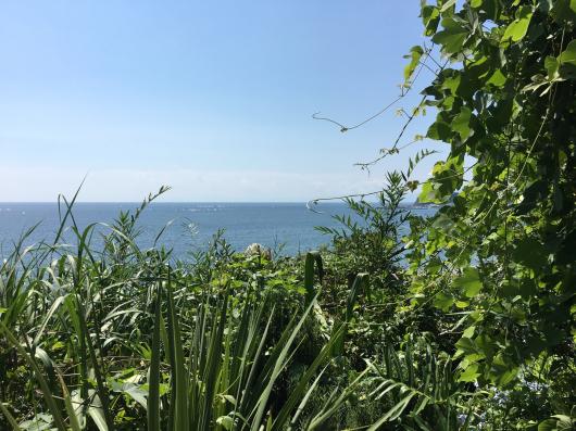 七里ヶ浜 アマルフィデラセーラでランチ_e0139694_19173651.jpg