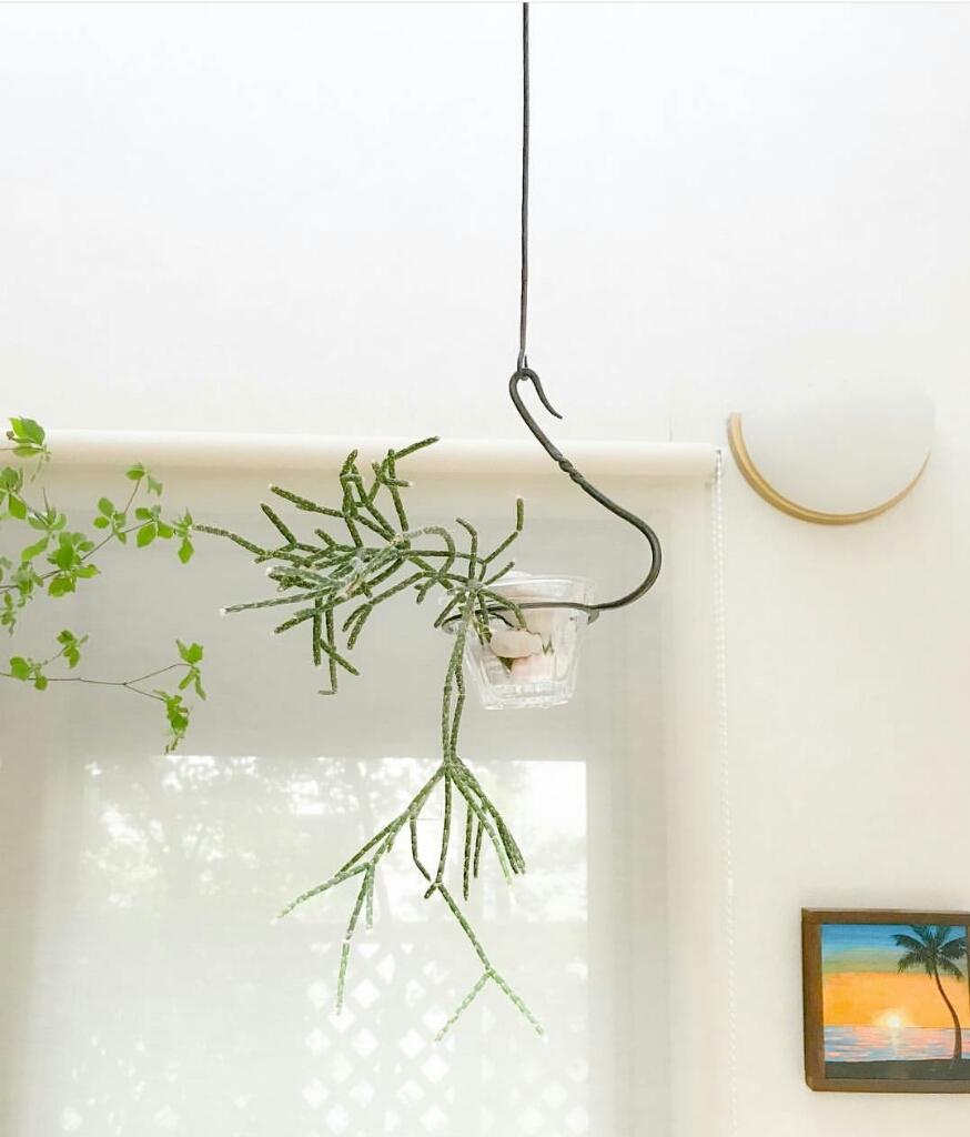 吊り花器 その2_d0065820_23472875.jpg