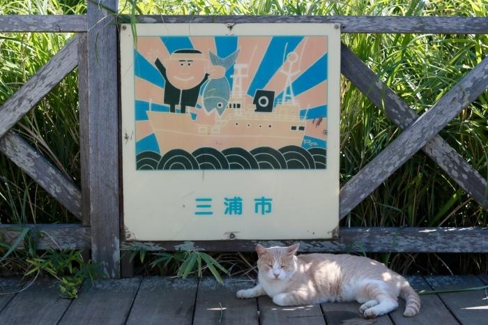 【県立 城ヶ島公園】_f0348831_20315577.jpg