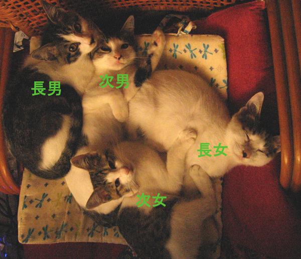 子猫里親さま募集、第二回!_f0182936_01062636.jpg