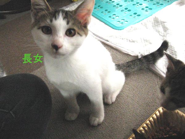 子猫里親さま募集、第二回!_f0182936_01062714.jpg