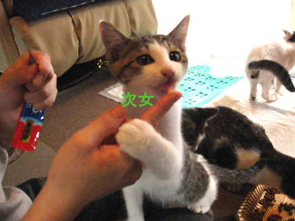 子猫里親さま募集、第二回!_f0182936_01062786.jpg